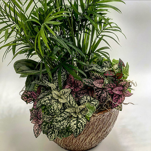 Texture Planter with Low Light Plants