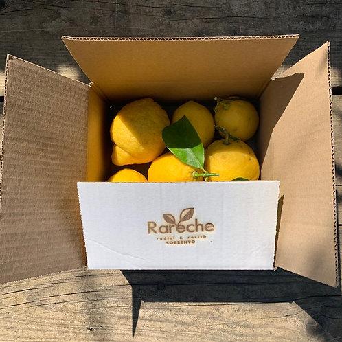 Box Limoni di Sorrento - 1,5 kg