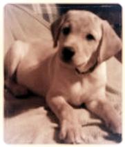 douglasville pet charity, pspawz.com, pawzitivel spoiled, pspawz, pet 411, humane society, love