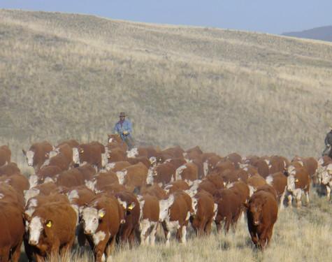 steers to white lake 017.jpg