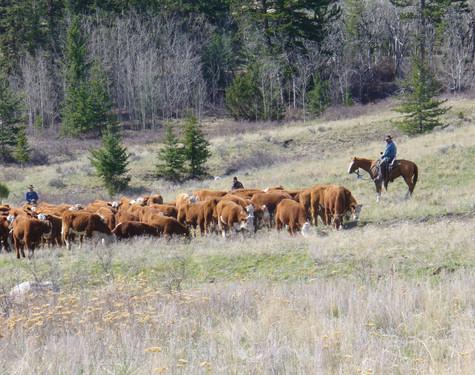steers to white lake 034.jpg