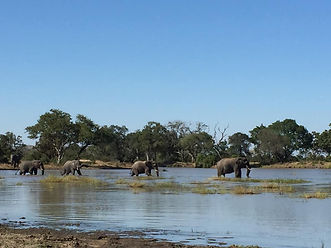 elephant crossing, Sussi and Chuma Zambia