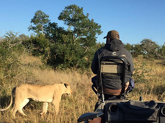 in the Sabi Sands, cool tracker