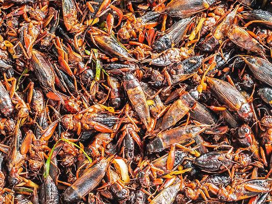 crickets-964067686.jpg