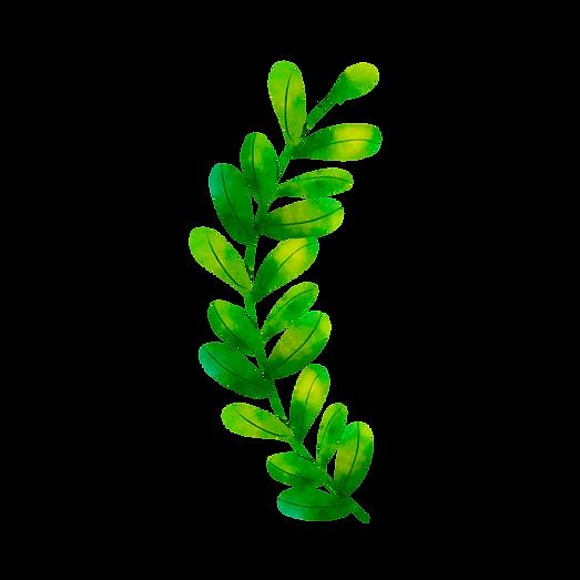 Rama de olivo (9).png