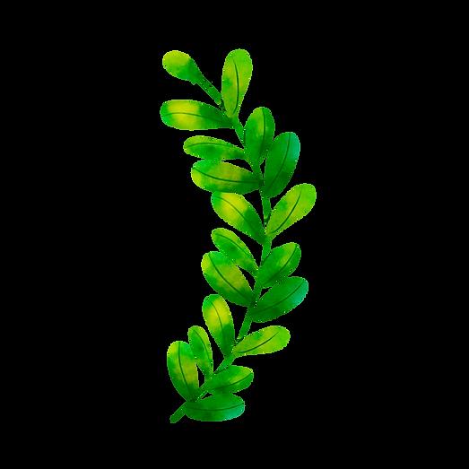Rama de olivo (8).png