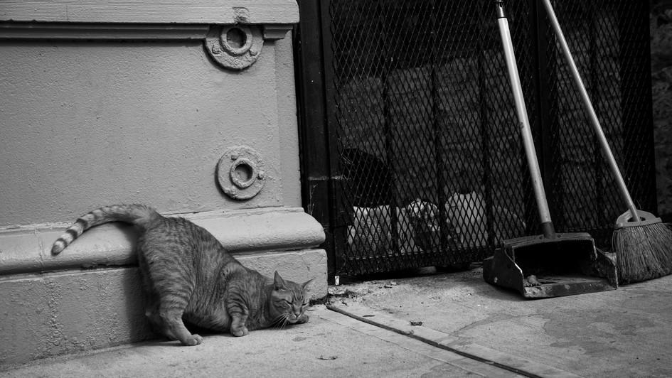 City Cats Part I.jpg