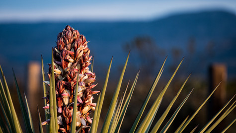 Rest stop Yucca.jpg
