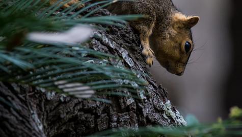 Squirrel species.jpg