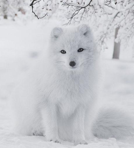 fox-5844892_1920_edited.jpg