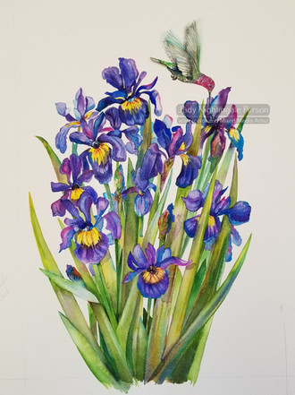 Anna's Irises