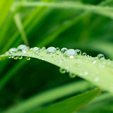 Leaf with water droplets to convey calming