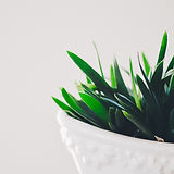 Plant to represent openness to finding an Aetna therapist in Phoenix, Ahwatukee, near me