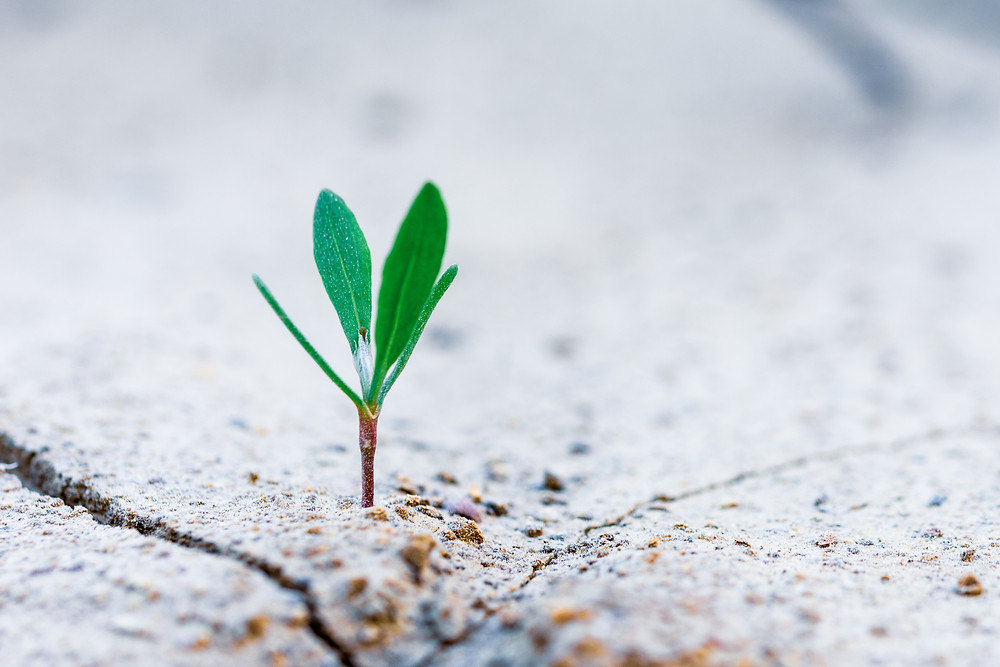 Plant growing in rock, representing hope for change, treatment