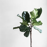Single Plant to convey Phoenix counselor will be there for you