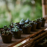 succulents to convey growth in therapy