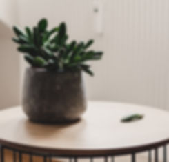 Succulent on end table- Phoenix Counselo