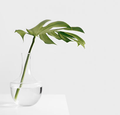 Leaf in Vase- to convey healing from bad memories with EMDR therapy