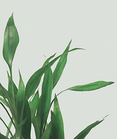 Grass to convey comofort in Booking trauma EMDR therapist to treat PTSD in Phoenix, Ahwatukee