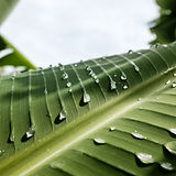 Leaf to convey soothing feeling