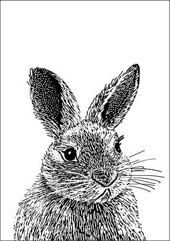 Rabbit Line Illustration