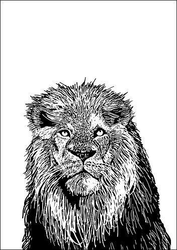 Lion Line Illustration