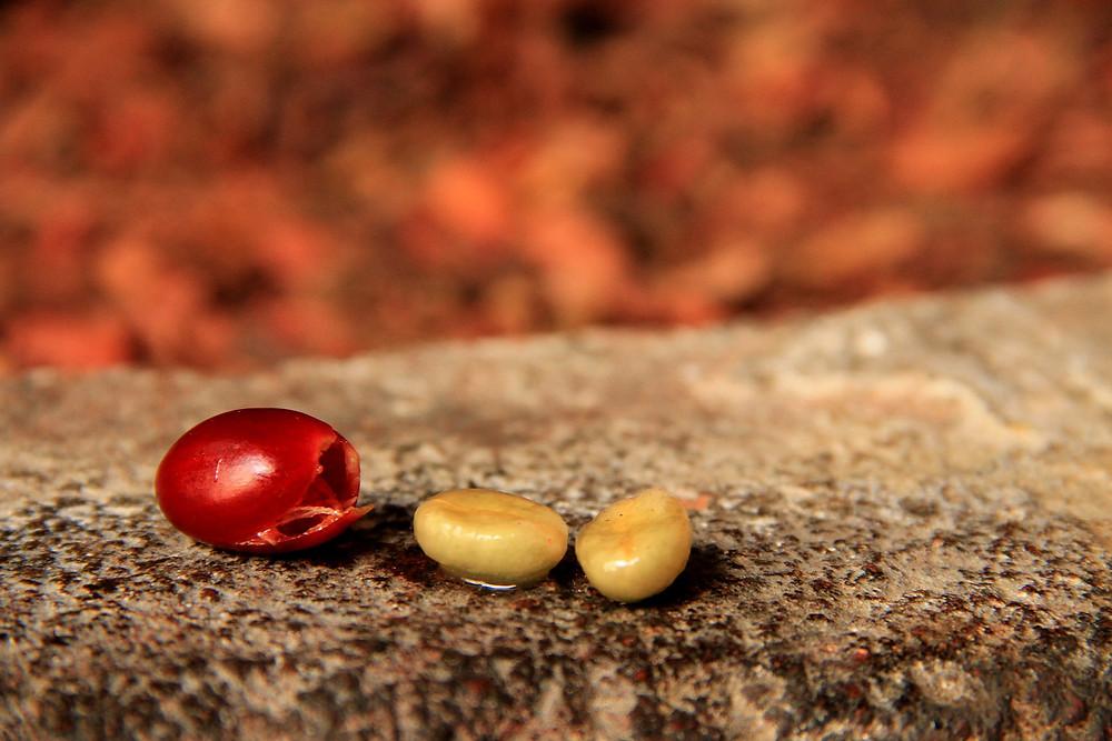 coffee bean mucilage