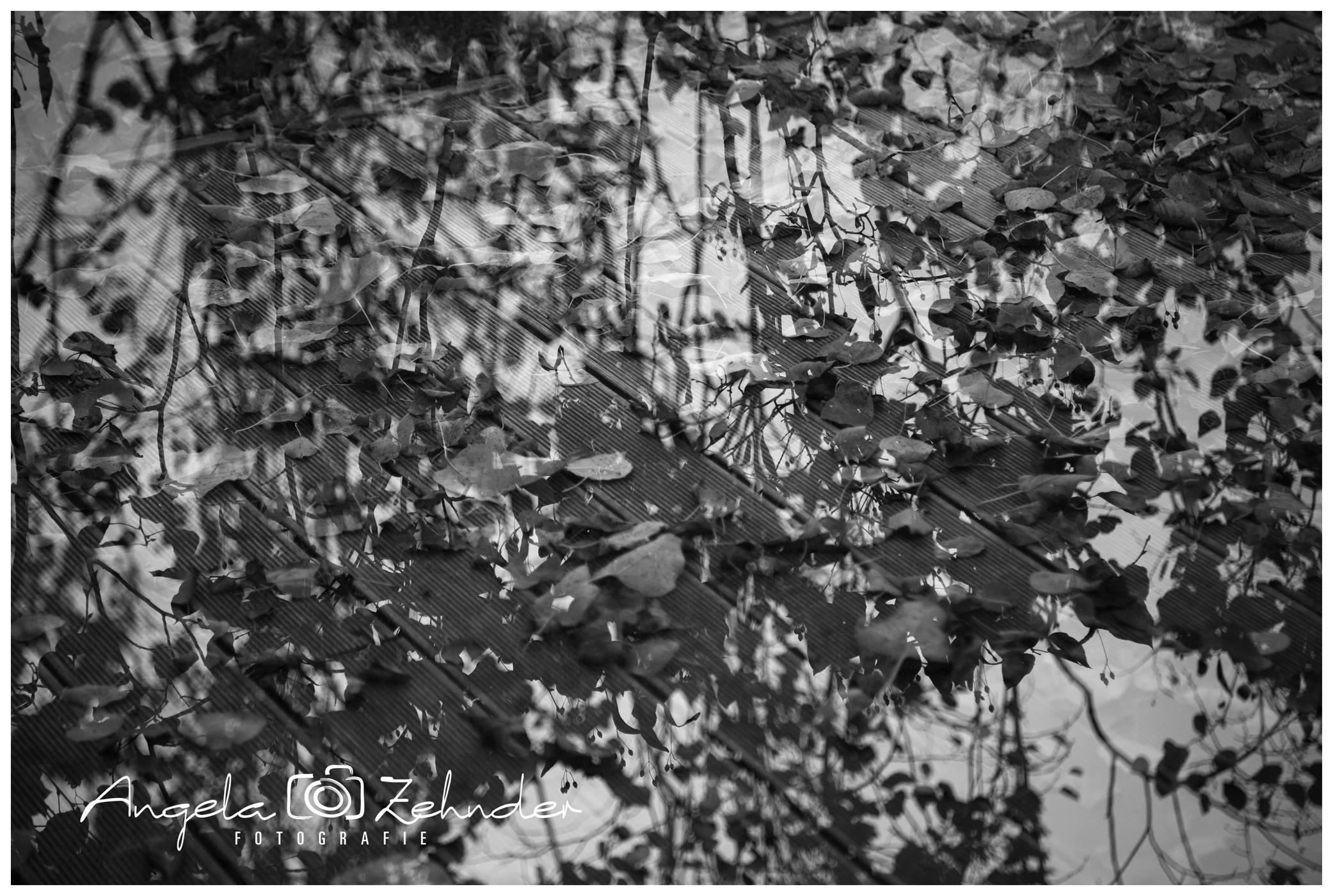 zehnder_fotografie_natur_8