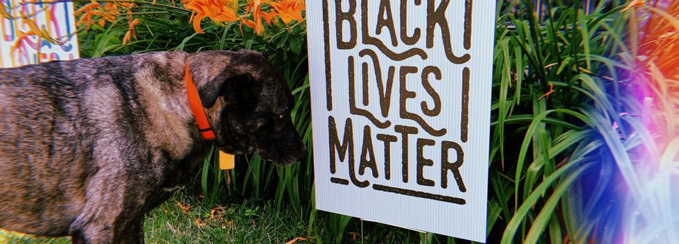 BLM yard sign black