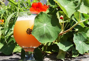 Tangerine Dream IPA 5.5%.   12oz.    $7