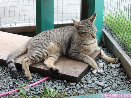 Abrigo de animais: Triste realidade.