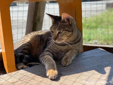 Gatos com PIF:  como identificar essa doença.