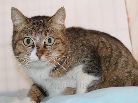 Mitos e verdades sobre banho em gatos.
