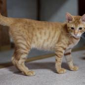 Billy Machinho de 4 meses