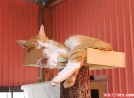 Porque alguns gatos encalham nos abrigos...?