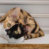Mink  Feminha de 4 meses
