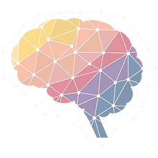 human-brain-neuroscience-neuroimaging-in