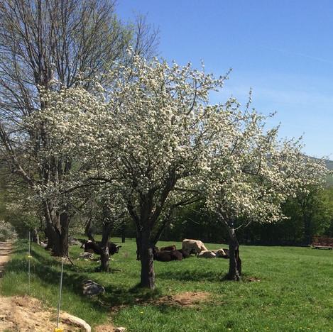 Blossom.time.jpg