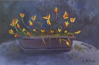 Tulipes folles