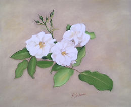 Roses blanches Pastel.jpg