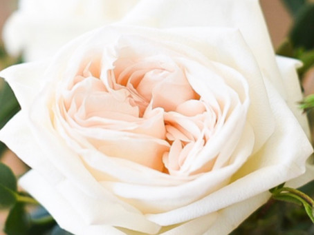 The Ultimate Wedding Roses