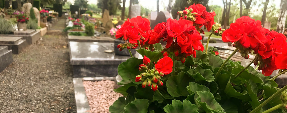 Friedhof Blumen