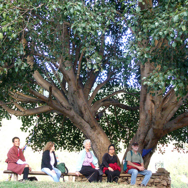 Guests resting under a holy Bo tree