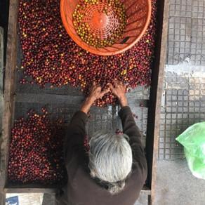 DESPERTANDO LA PASIÓN POR EL CAFÉ