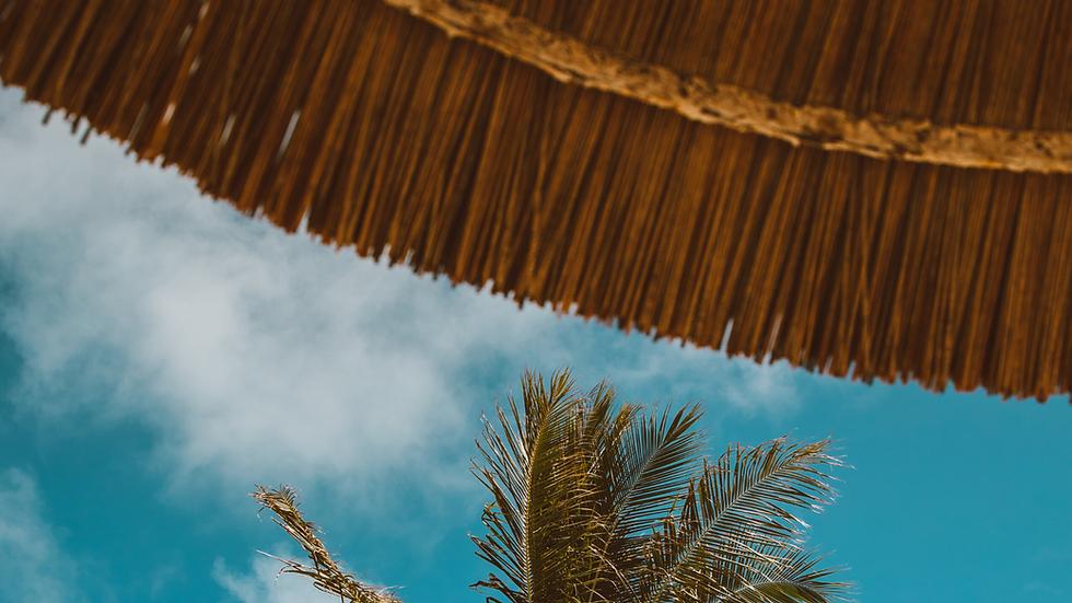 Benab Palm Tree.png