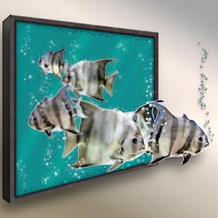 P17-116RA Atlantic Spadefish