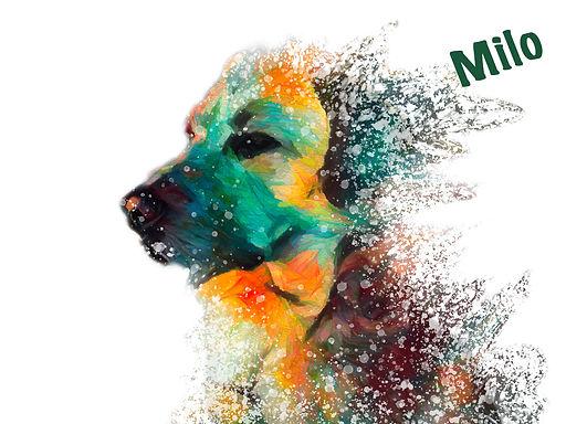 Dog Splatter.jpg