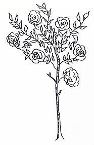 Rose_Tree_Right.jpg