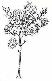 Rose_Tree_Left.jpg