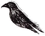 Crow_Right.jpg
